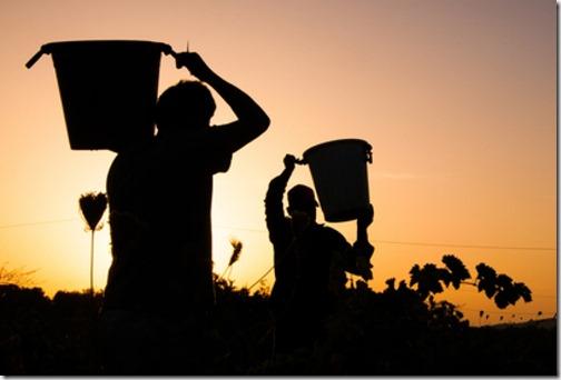 Pritcha-o-Hosiaine-Vynogradnika-i-vynogradarjah