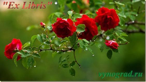 Ex Libris...Спасибо за Розы...