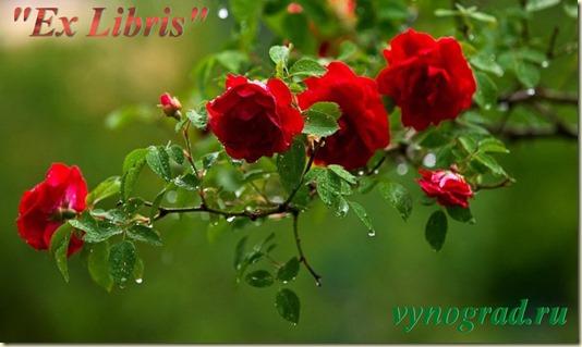 Переход по ссылке на страницу *Ex Libris... в Очерк *Спасибо за Розы...