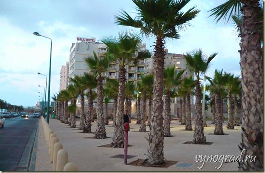 На этом фото показано, как между отелями в Нетании выросли небольшие пальмовые рощицы...))