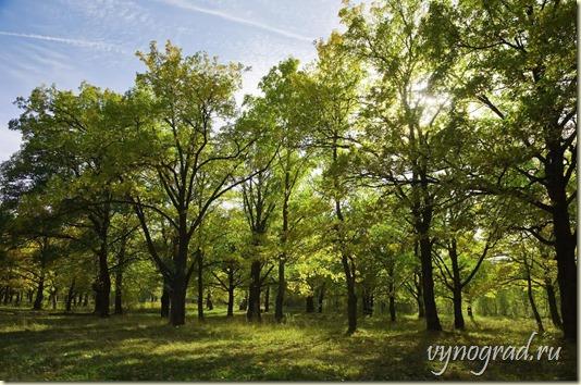 В Нетании много зелёных парков. Один из них Дубовая роща на этом фото. Ссылка напомнит Вам об этом...