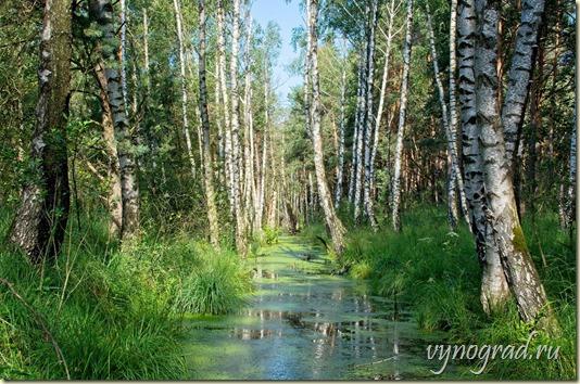 Ссылка этого фото открывает Стихотворение *В лесу* - Автор Виктория VK...